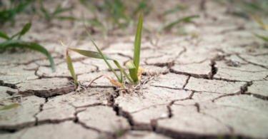 Famílias angolanas afetadas pela seca vão receber formação agrícola