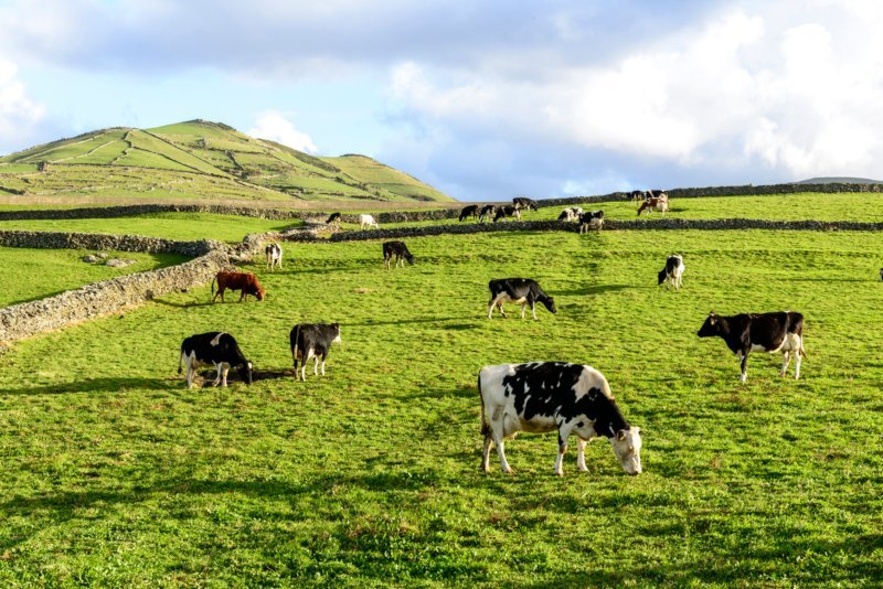 """Valorização das pastagens é """"enorme mais valia"""" para a agricultura nos Açores"""