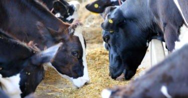 IACA alerta que alimentação dos animais pode estar em risco devido à greve dos motoristas de matérias perigosas