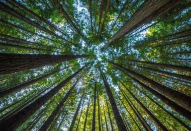 Só três municípios se candidataram a financiamento para limpeza das florestas