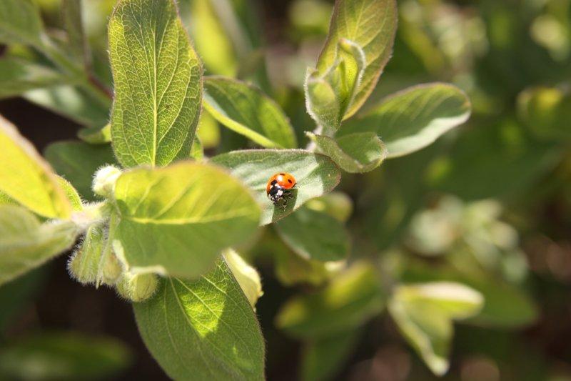 Fruticultura biológica com potencial para crescer nos Açores