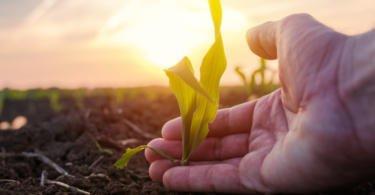 Preocupação dos consumidores com a biodiversidade pode ser catalisador de mudança na agroindústria