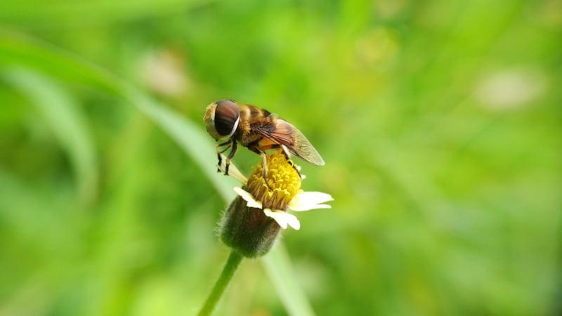 Feromonas que são alternativa a pesticidas vencem prémio de inovação da UE