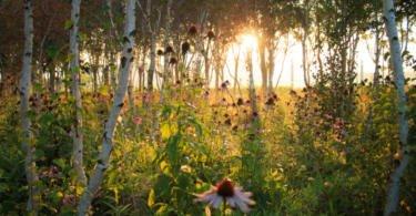 Flores silvestres benéficas para a produção agrícola