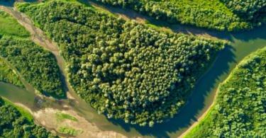 """Primeiro-ministro pede """"mobilização nacional"""" para uma floresta mais segura"""