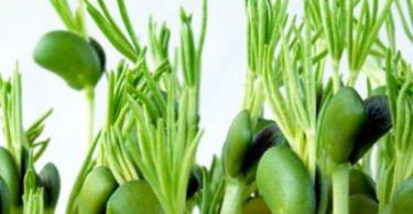 Lusosem vai distribuir biofungicida produzido a partir de sementes de tremoço