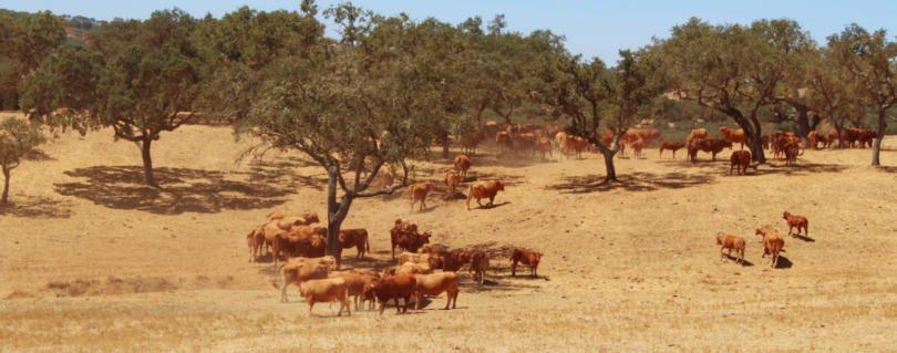 Agricultores alentejanos reclamam medidas de apoio para fazer frente à seca