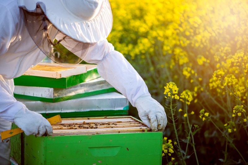UE tem 120 M€ para apoiar apicultores