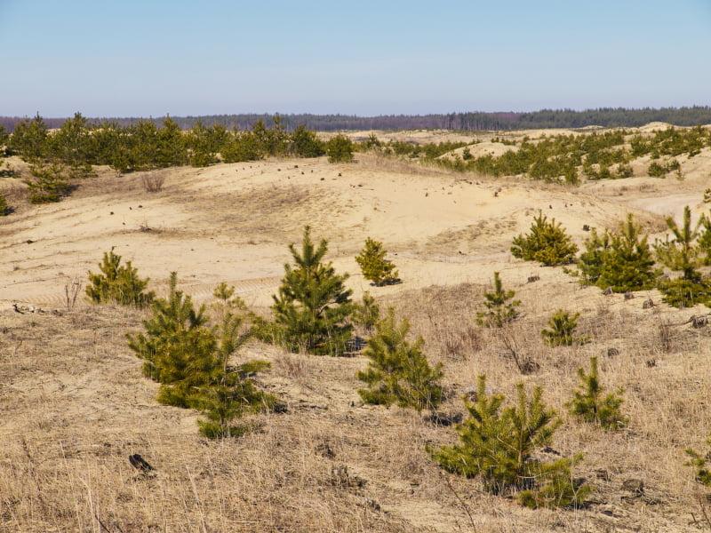 60% do território nacional em risco de desertificação