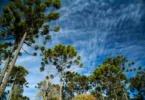 Inventário Florestal Nacional será publicado em breve
