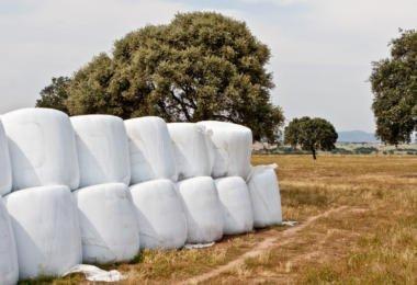 Integração tecnológica e intensificação sustentável na produção de forragens