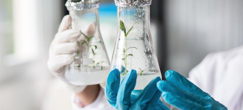Investigação aposta na valorização de produtos e subprodutos agrícolas
