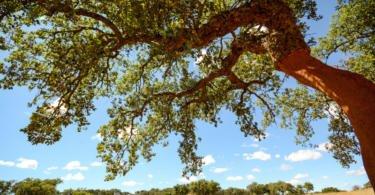 Projecto Incredible premeia ideias inovadoras que aumentem valor dos produtos florestais