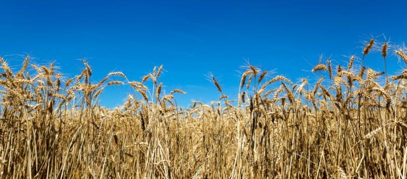 Marca 'Cereais do Alentejo' deverá gerar volume de negócios de 2,5 M€ em dois anos