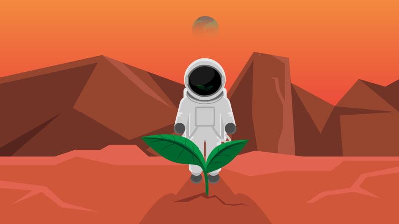Agricultura em Marte? Investigadores de Harvard descobrem solução
