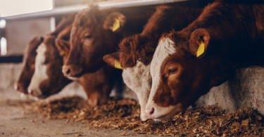 Estação Zootécnica Nacional recebe projeto de investigação para desenvolvimento de alimentos inovadores para animais