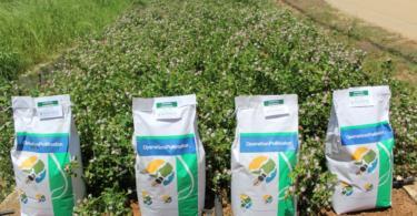 Syngenta e Fertiprado reforçam parceria no âmbito do 'Operation Pollinator'