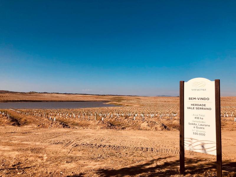 Veracruz investe 50 M€ em amendoal em Portugal