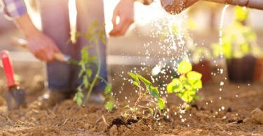 Governo tem 300 mil euros para financiar formação em Agricultura Familiar