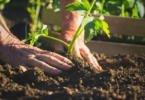 Ministério da Agricultura paga mais 73 M€ de apoios