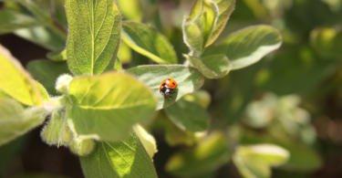 Bioprodutores: organização quer unir produtores de biológicos e melhorar qualidade da produção