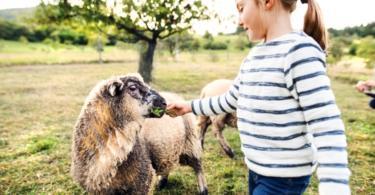 Quinta britânica ajuda crianças com necessidades especiais com recurso aos animais