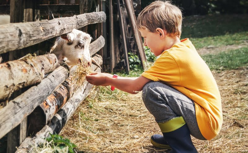 Crianças que nascem em zonas rurais têm sistemas imunitários mais fortes