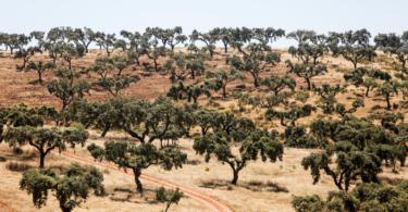 Iniciativa Pró-Montado Alentejo quer fundos próprios para a floresta autóctone e para o combate à desertificação