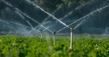 Projeto da FAO quer aproveitar águas residuais tratadas para a agricultura