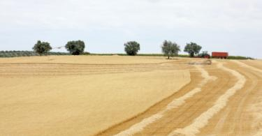 Seca: Governo levanta restrições sobre terras em pousio