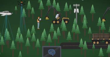 Floresta com inteligência