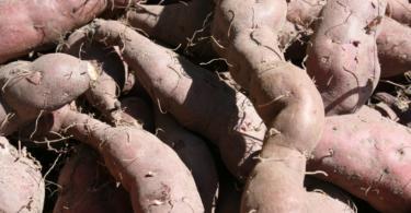 Cebola e batata-doce da Madeira passam a contar com selo DOP