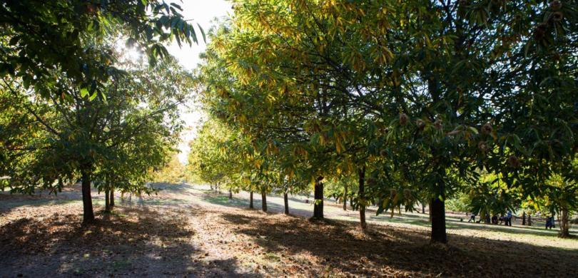 40% das espécies de árvores da Europa ameaçadas de extinção
