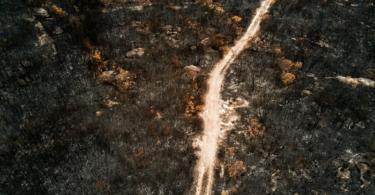floresta ardida vida rural