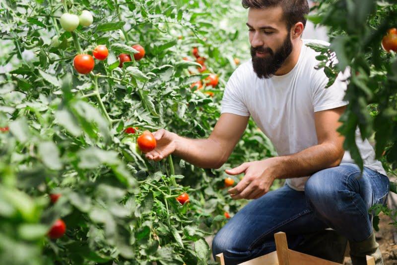 Os jovens agricultores do Continente já se podem candidatar a um prémio à instalação, no âmbito do Programa de Desenvolvimento Rural (PDR 2020). As candidaturas estão a decorrer até 8 de novembro.