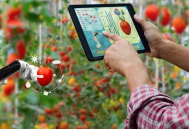Robots chegam à agricultura