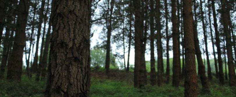 Ministério do Ambiente fica com a tutela das florestas