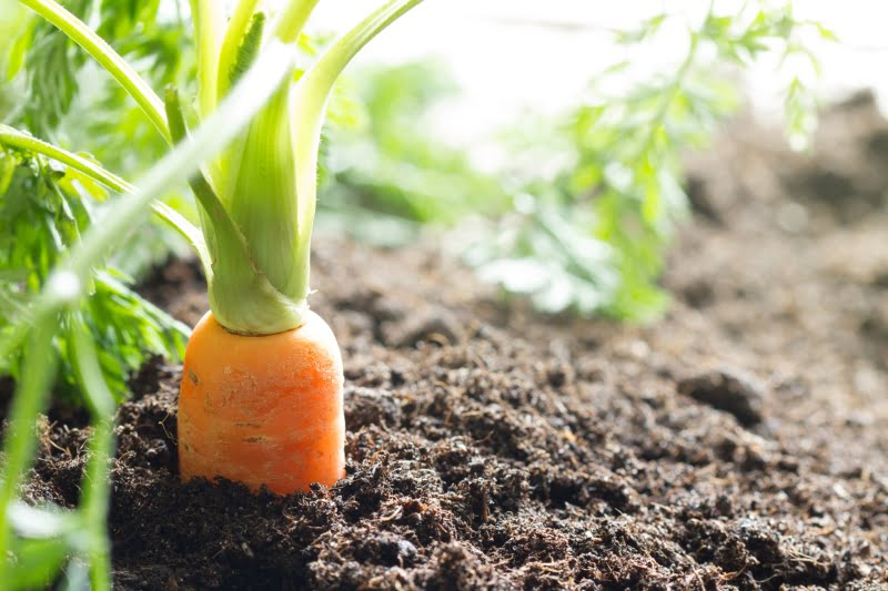 Agricultura biológica já ocupa 7% das terras agrícolas em Portugal