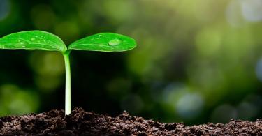 Syngenta investe 2 mil M$ em sustentabilidade