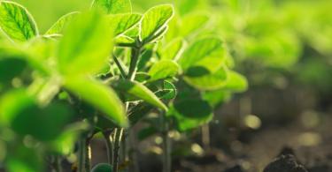 Que medidas propõe o Governo para a Agricultura?