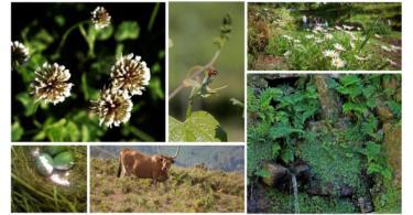 Universidade do Minho estuda biodiversidade nas vinhas de Melgaço