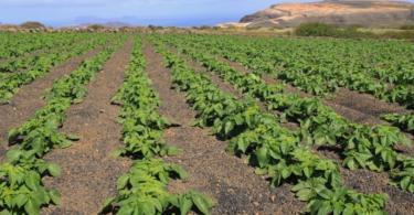Nações Unidas dão 274,2 M€ para melhorar agricultura moçambicana