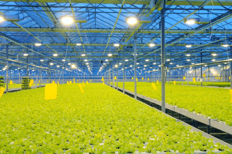 DIVA incentiva setor agroalimentar a inovar