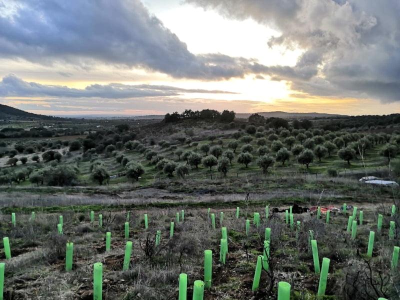 Vinhos do Alentejo plantam mais de 1250 árvores