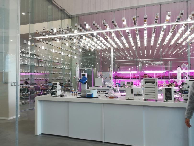 Almeria quer ser a Silicon Valley da agricultura saudável