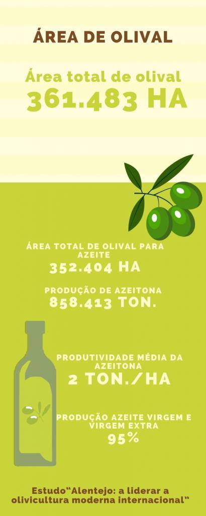 Produtividade da azeitona quadruplicou