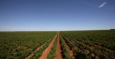 Smart Farming, a ferramenta que faz a agricultura mais inteligente