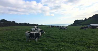 """Unileite lança leite de pastagem, """"um valor patrimonial"""" dos Açores"""