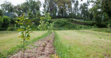 Agroecologia: alimentar o presente construindo o futuro