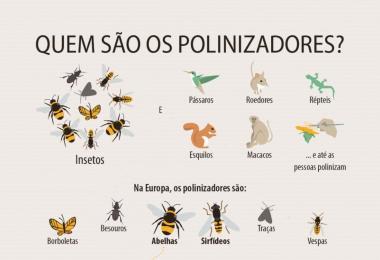 Porque estão a desaparecer as abelhas e os polinizadores?